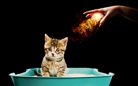 Обои hand, cat, fireball