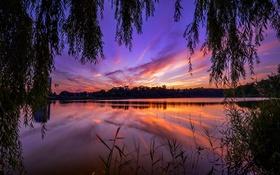 Картинка трава, деревья, закат, ветки, река, камыши, вечер