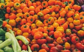 Обои оранжевый, красный, перец