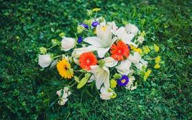 Обои трава, цветы, лилии, букет, герберы