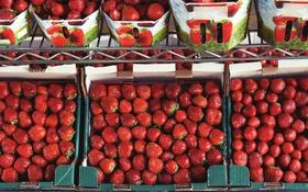 Обои ягоды, клубника, красная, много