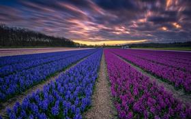 Обои ночь, цветы, поле