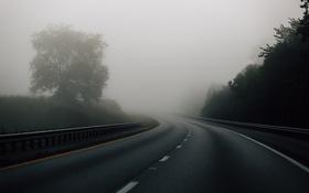 Обои дорога, деревья, туман
