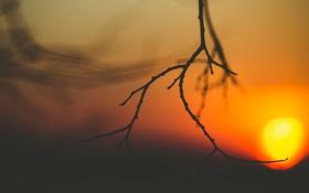 Обои солнце, закат, ветка
