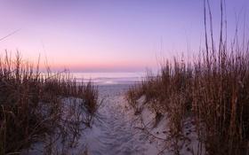 Обои море, пляж, закат