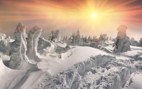 Обои зима, лес, солнце, снег, елка, nature, winter