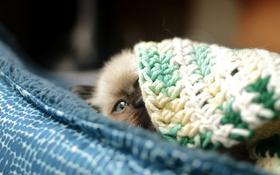 Картинка кот, котенок, смотрит