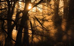 Обои лес, свет, туман