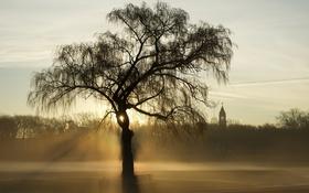 Обои свет, туман, дерево, Chicago, Lincoln Park
