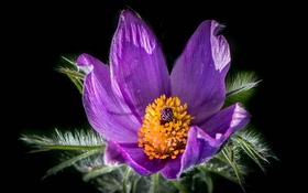 Картинка цветок, фон, лепестки, тычинки
