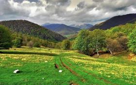 Картинка трава, деревья, горы, Италия, Ломбардия