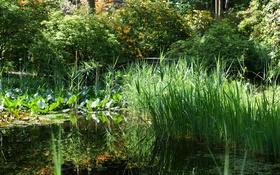 Обои зелень, трава, деревья, пруд, парк, камыши, Швейцария