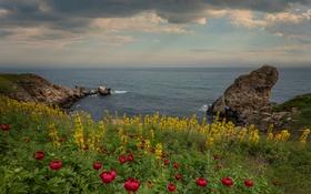 Обои море, небо, облака, пейзаж, цветы, природа