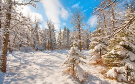 Обои зима, лес, снег, деревья