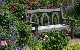 Обои цветы, скамейка, Англия, розы, сад, Devon, солнечно