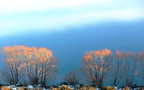 Обои небо, снег, деревья