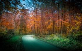 Обои дорога, осень, лес, деревья