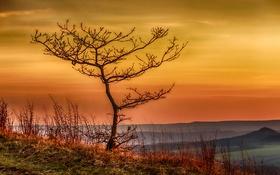 Обои осень, трава, горы, дерево, Германия, горизонт, зарево