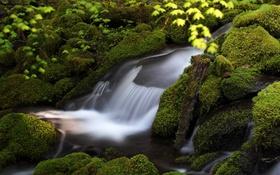 Обои зелень, вода, камни, мох, поток