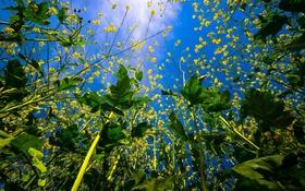 Обои небо, листья, природа, цветочки, вид снизу, веточки