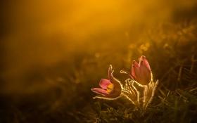 Обои свет, цветы, природа