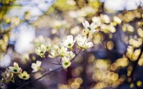 Обои природа, весна, сад
