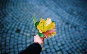 Обои осень, листья, клен