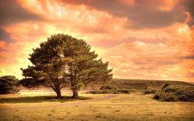 Обои дорога, небо, облака, дерево, поляна, зарево, тропинка