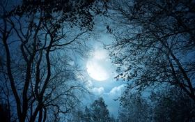 Обои деревья, луна, ночь, лес, облака, небо, ветки