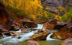 Обои осень, деревья, камни, скалы, Юта, США, Сион Каньон