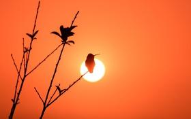 Обои свет, птица, ветка