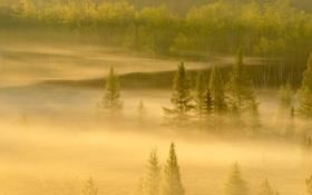 Обои лес, деревья, туман, Канада, Онтарио, Садбери