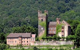Картинка зелень, лес, замок, Германия, солнечно, Neckarsteinach, Mittelburg