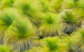 Обои краски, природа, Ланселин, Западная Австралия, ветер, трава