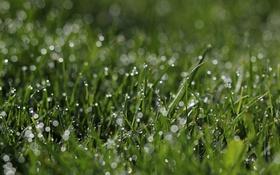 Обои трава, капли, зеленый