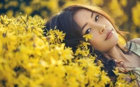 Картинка цветы, лицо, волосы, брюнетка, азиатка