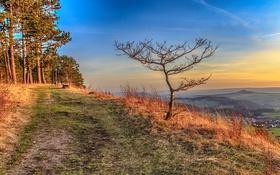 Обои дорога, горы, природа, дерево, Германия, Тюрингия