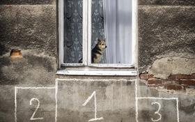 Обои дом, собака, окно