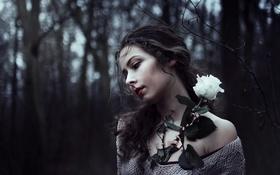 Обои цветок, девушка, роза