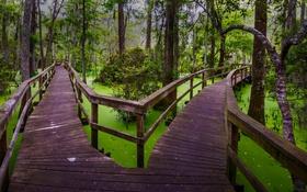 Обои лес, деревья, болото, дорожка, Южная Каролина, США, мостик