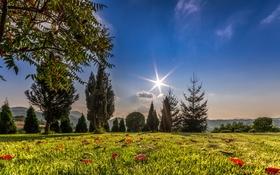 Картинка небо, трава, солнце, облака, деревья, горы, поляна