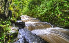 Картинка зелень, лес, парк, ручей, камни, Англия, водопад