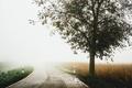 Картинка дорога, туман, дерево