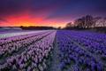 Картинка поле, небо, закат, цветы
