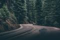 Картинка дорога, деревья, трасса