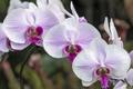 Картинка макро, розовый, нежность, орхидея