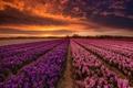 Картинка поле, закат, цветы
