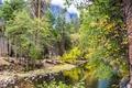 Картинка осень, лес, деревья, камни, скалы, Калифорния, США