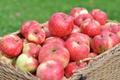 Картинка макро, корзина, яблоки, урожай, фрукт