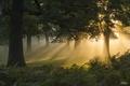 Картинка лес, солнце, свет, деревья, папоротник